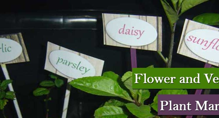 Flower and Vegetable Plant Markers